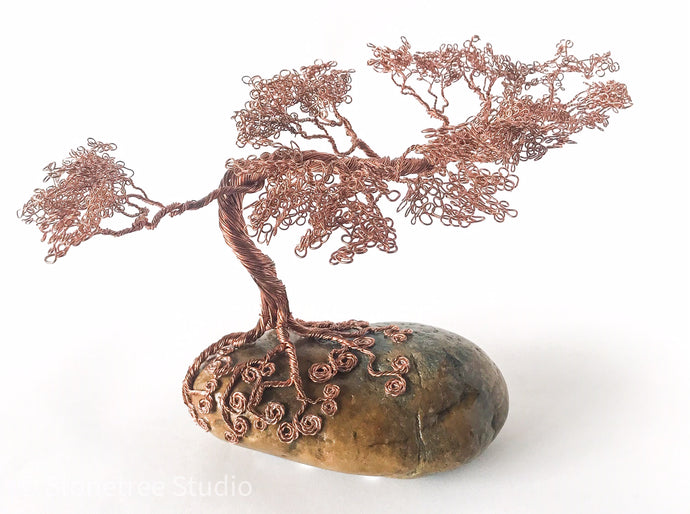 Monterey pine copper on stone