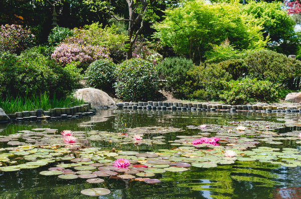 Here's how you can create a showstopping garden pond this summer