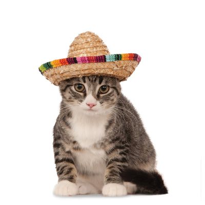 Straw Sombrero Cat Hat