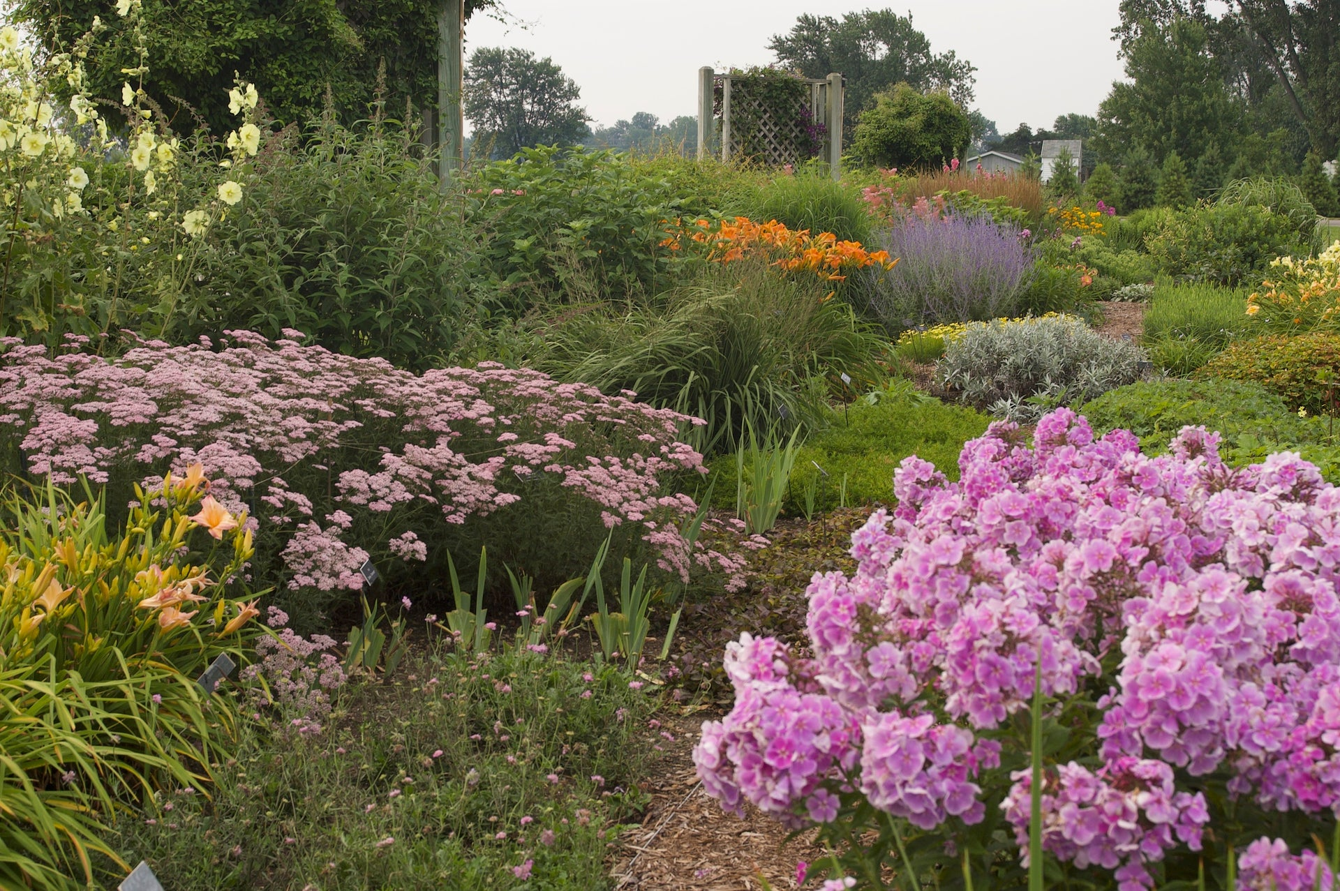 Pink and Purple Perennials in a Flower Garden