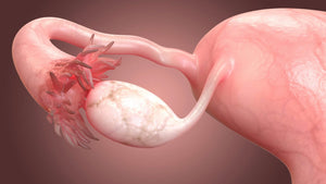 Session 8: Rebuilding Ovarian Function