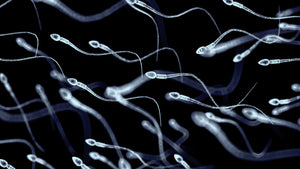 Session 11: Moving Sperm Forward