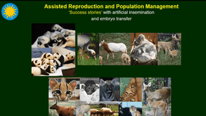 Fertility Preservation and Genome Resource Banking for Rare and Endangered Animal Species