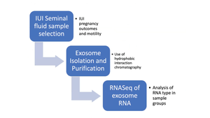 Isolation, Purification and Initial RNA Sequence Analysis of Seminal Fluid Exosomes between Pregnant and Non-Pregnant Intrauterine Insemination Pregnancies