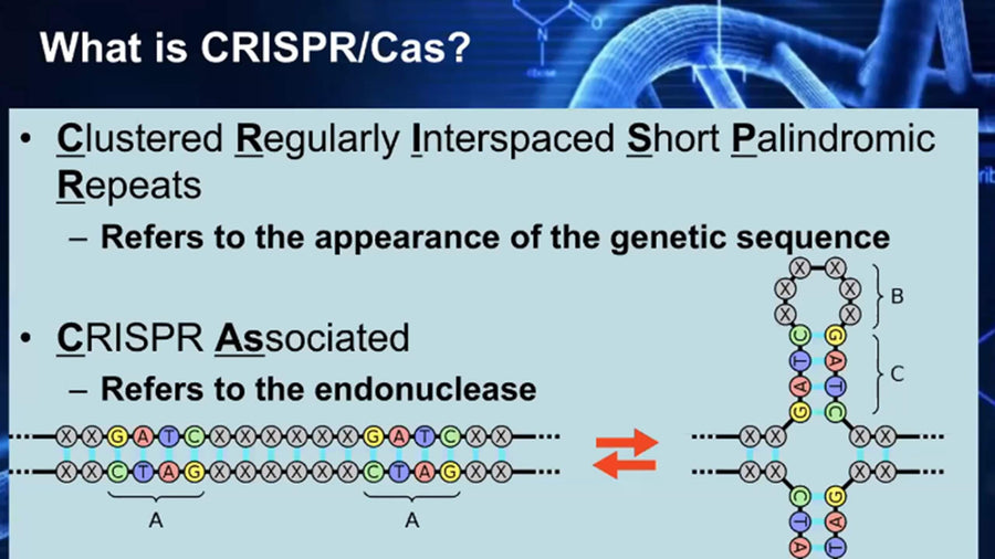 CRISPR Genome Editing.  How, What and Why?