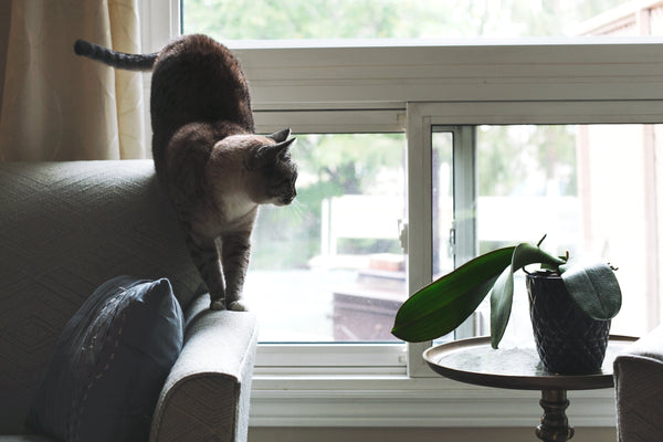 cat on sofa looking at houseplant