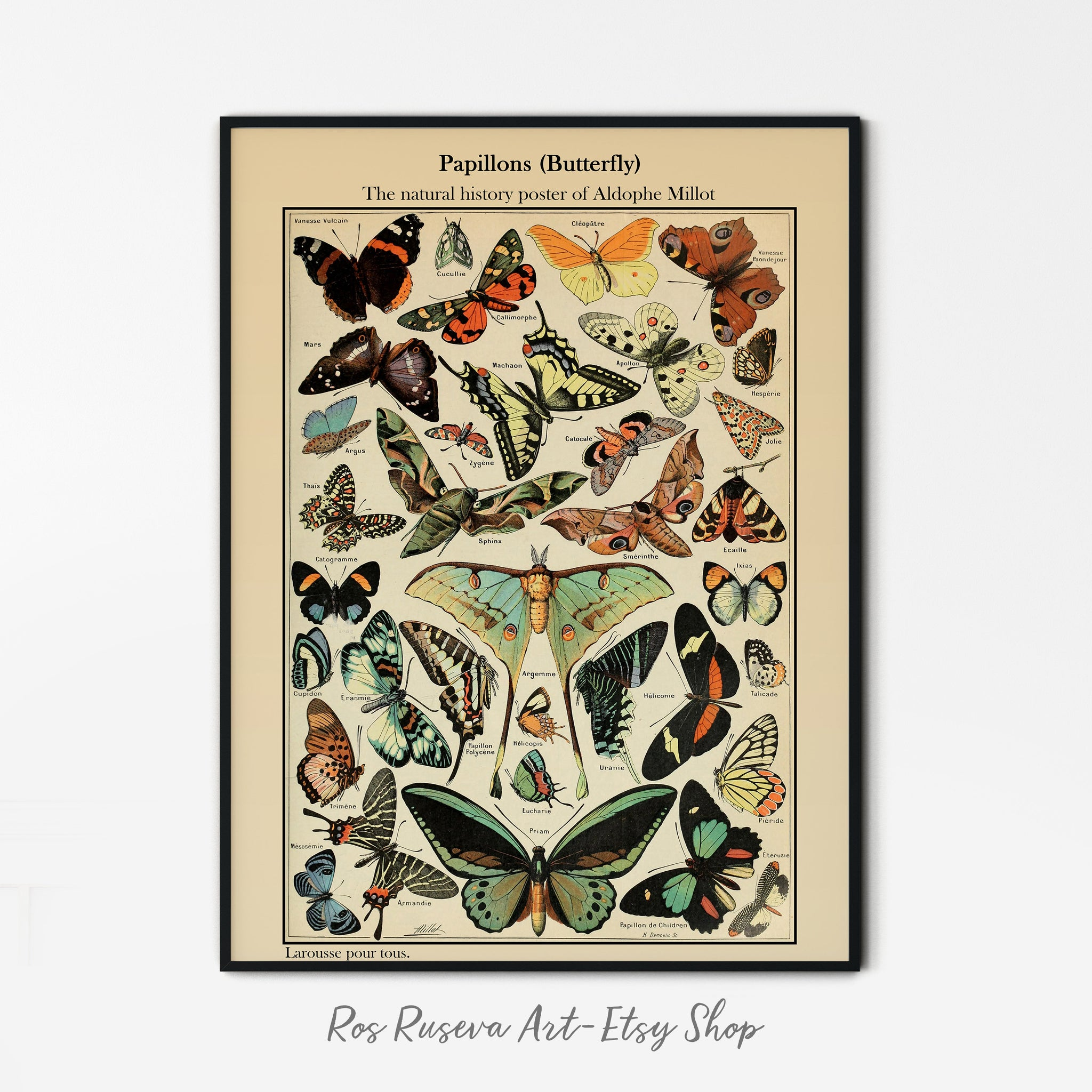 Natural History Poster Vintage Butterfly Print Adolphe Millot Poster Vintage Poster Butterfly Illustrations Butterfly Prints ButterflyPoster