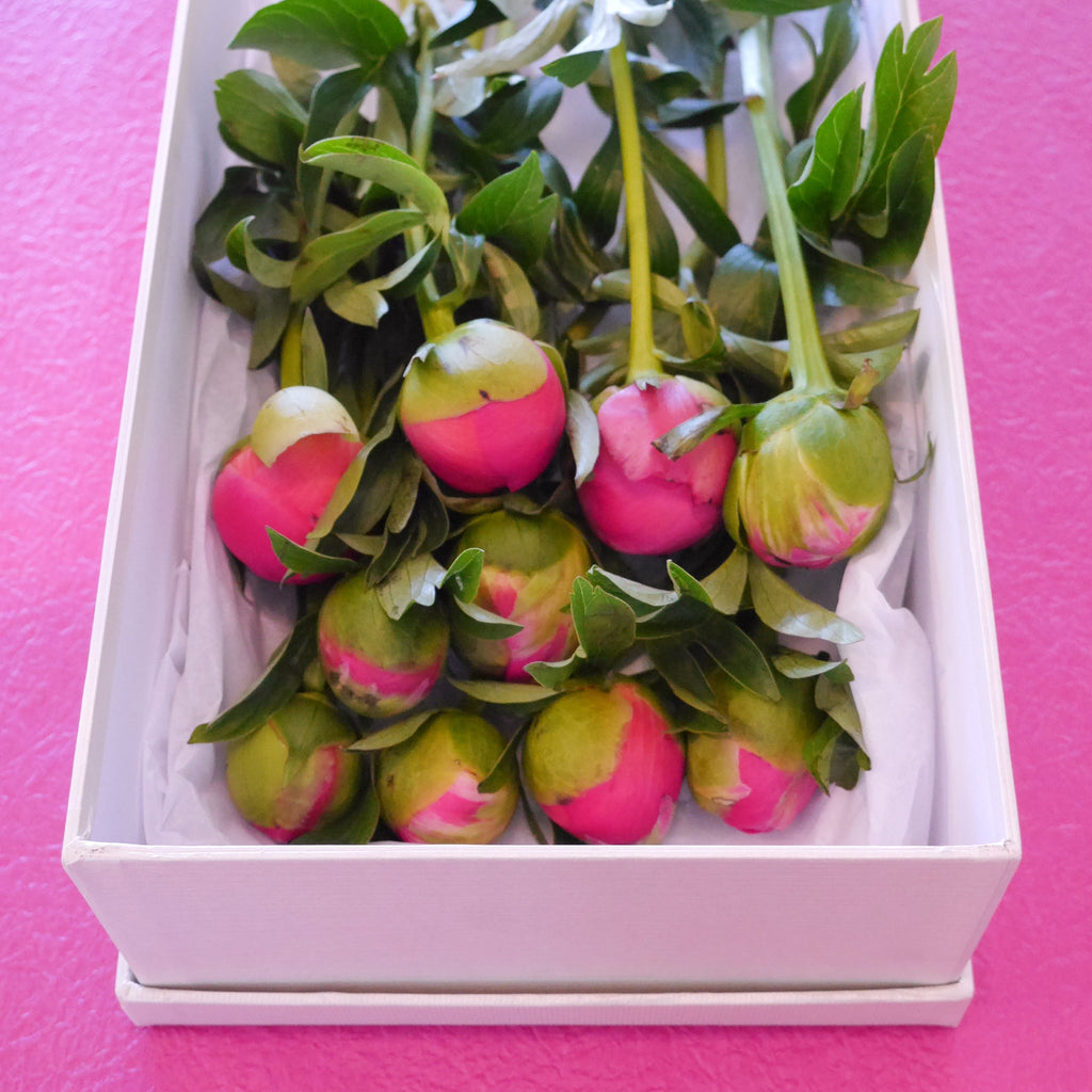 A boxed set (10 stems) of Peonies