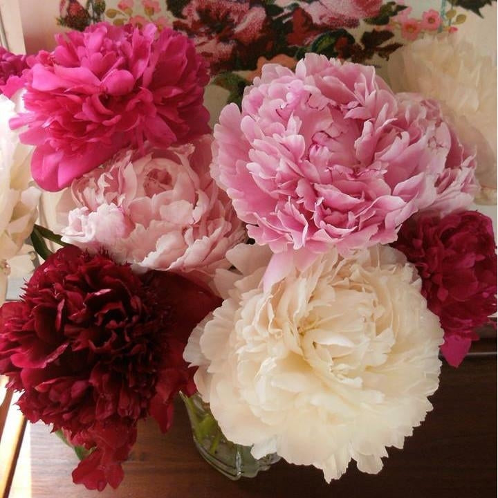 Peonies from Heaven