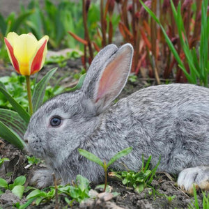 Scary German Guy Soap