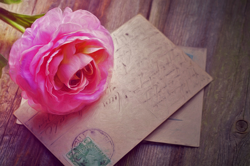 A pink rose and a postcard