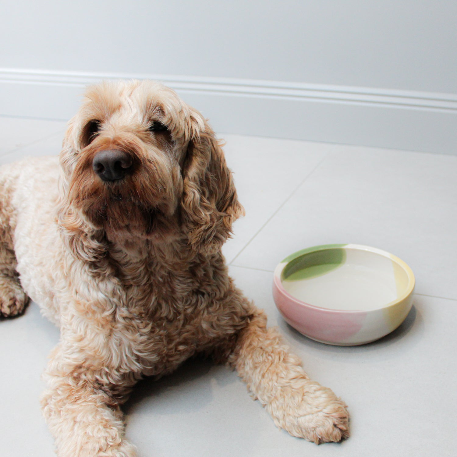 Milo the dog sitting next to a white, pink, green and yellow ceramic dog bowl.
