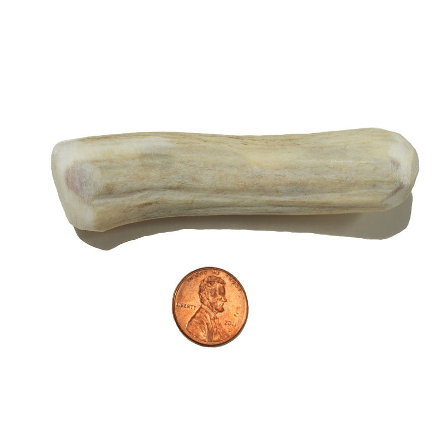 Medium Small Whole Antler Chew