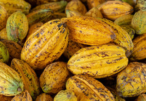 Load image into Gallery viewer, Cacao Fruits