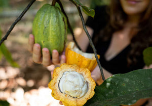 Load image into Gallery viewer, Wild cacao in nature