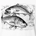 Speckled Trout and Redfish Kids Performance Long Sleeve, Performance Gear - Southern Cross Apparel