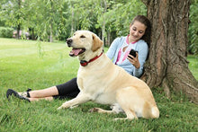 Charger l'image dans la galerie, Stay+Play Wireless Fence™ Stubborn Dog Add-A-Dog® Extra Receiver Collar