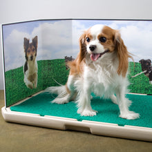 Load image into Gallery viewer, Piddle Place™ Pet Potty Bio+ Concentrate (9-Pack) & Turf Treatment