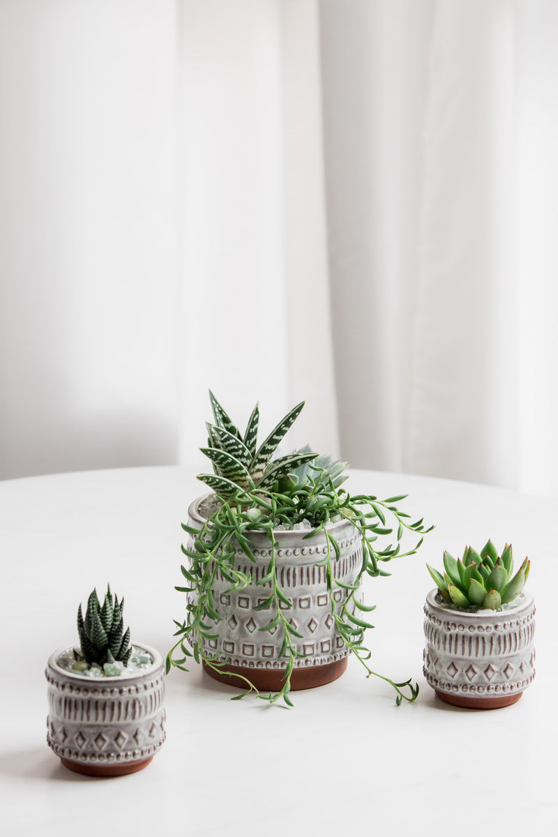 Freja Pot Succulent Arrangement