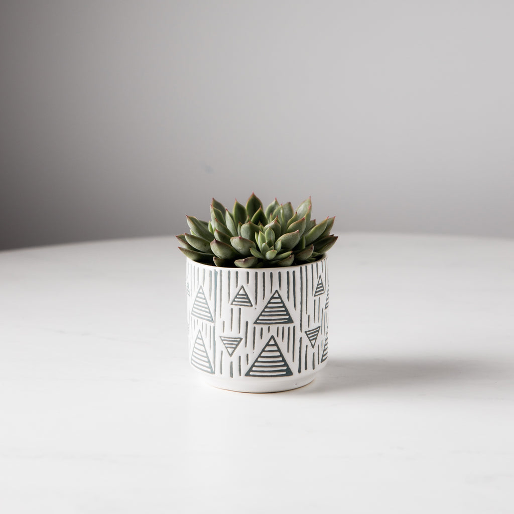 Arrow Tree Pot
