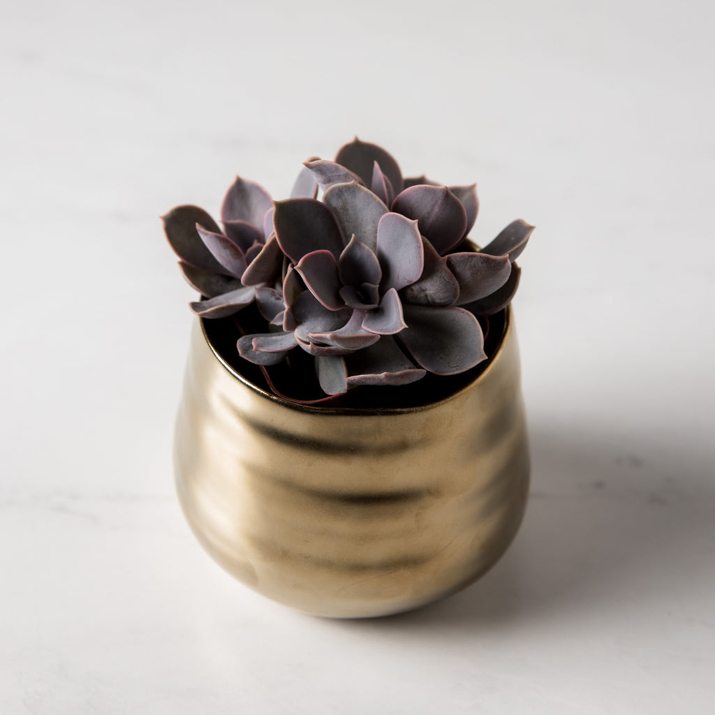 Gold Tegan Pot
