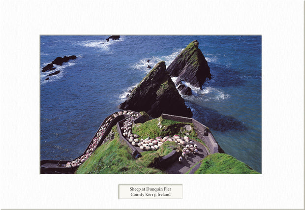 Sheep at Dunquin Pier  - Visions of Ireland