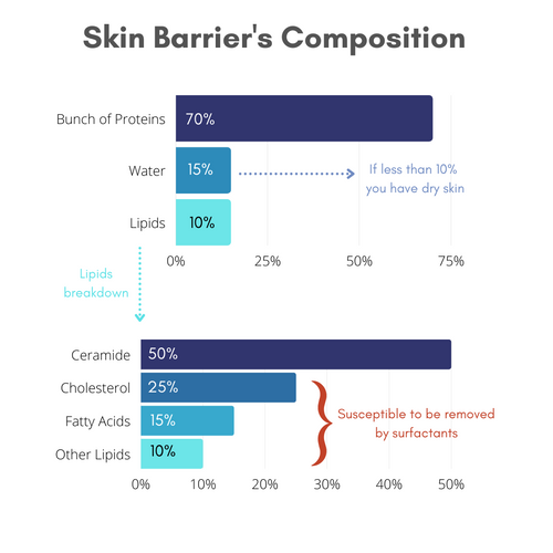 Chart showing the composition of skin barrier