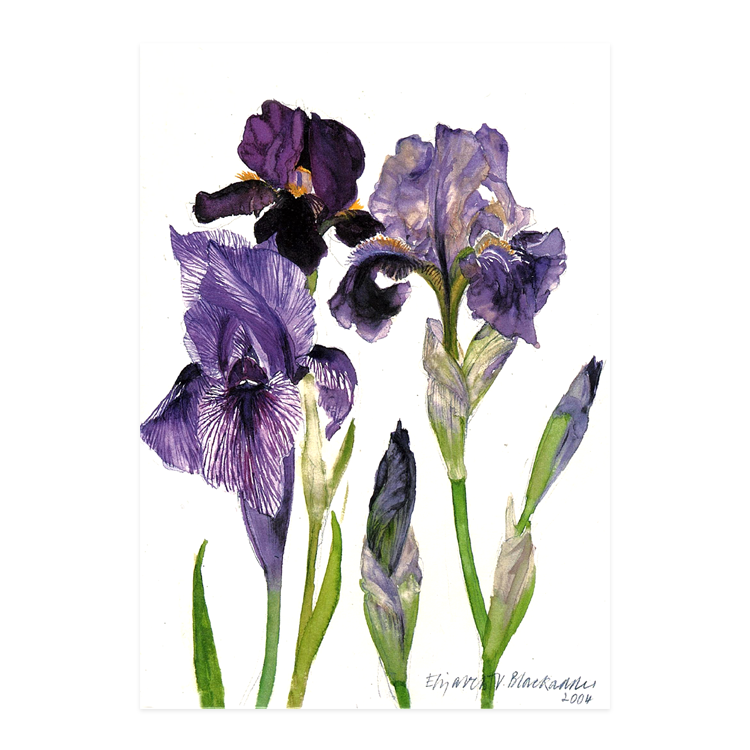 Elizabeth Blackadder DBE RSA RA, 'Three Irises'