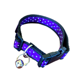 Dots Party! Dog Collar