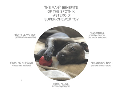 """The Asteroid"" Ultra Durable Rubber Chew Toy"