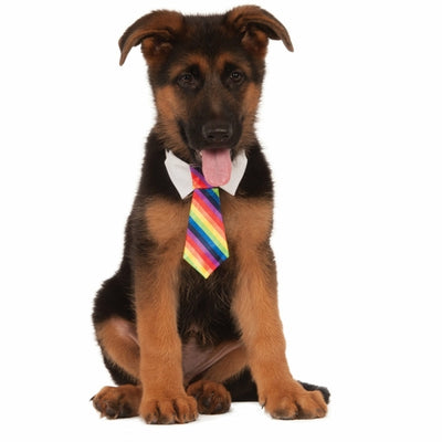 Rainbow Dog Necktie