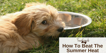 7 Tips To Keep Your Dog Cool In The Summer Heat