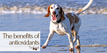 The benefits of antioxidants for your dog