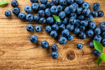 The Benefits of Blueberries to your Dog's Health