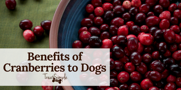 Are Cranberries Good For Dogs?