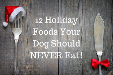 12 Holiday Foods Your Dog Should Never Eat