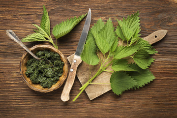The Benefits of Nettle Leaves For Dogs