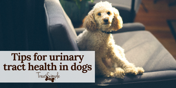 Tips for Healthy Urinary Tract in Dogs