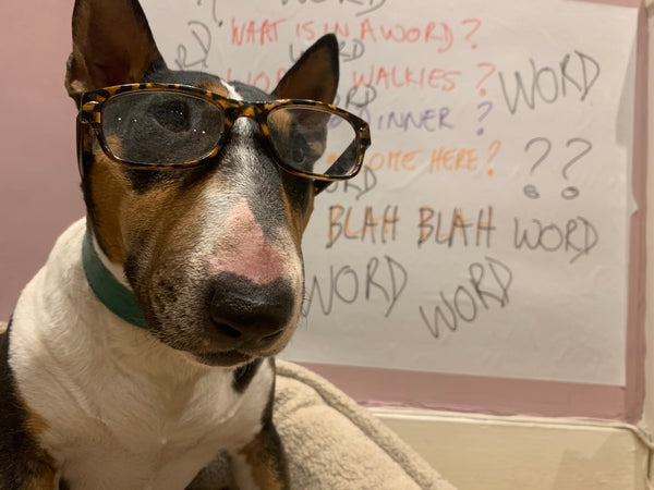 What is in a word? Dogs do not understand speech as much as body language