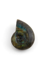 Ammonite Shaped Labradorite