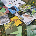 Load image into Gallery viewer, Teddo Play Flashcards - Birds of Prey, Insects, Farm & Wild Animals (Spelling Edition) Set of 40