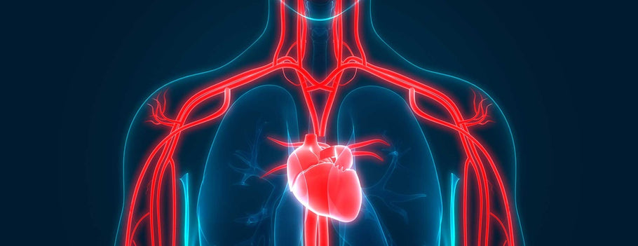 The Role of Nitric Oxide for Heart Health