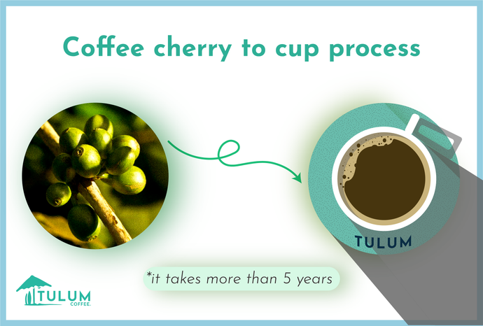 Coffee Cherry to Cup process