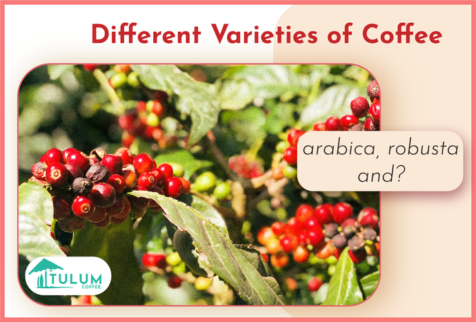 Different varieties of coffees