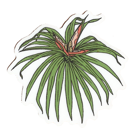 ʻIeʻie sticker