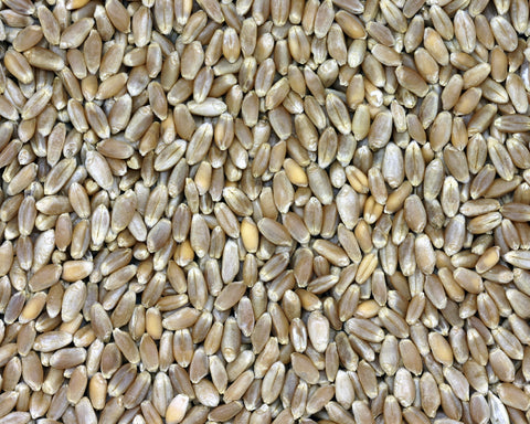 Organic Red Fife Wheat Kernels