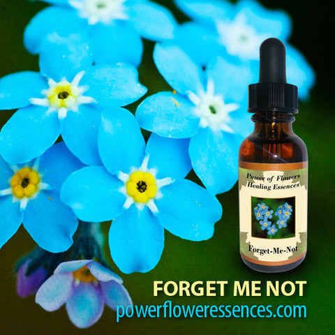 Forget Me Not Flower Essence