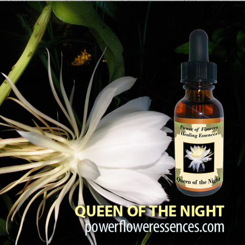 Queen of the Night Flower Essence