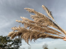 Load image into Gallery viewer, Prairie Pampas
