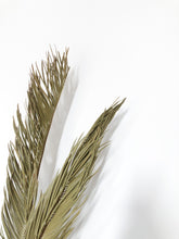 Load image into Gallery viewer, Dried palm leaves, home decor, wedding, events